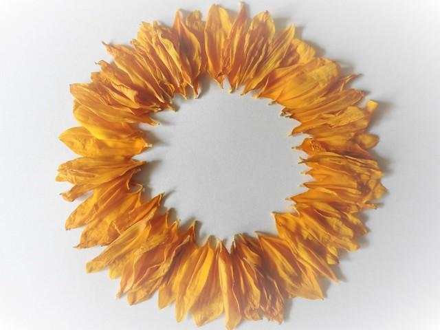 Sunflower Petals, Panasonic DMC-TZ56