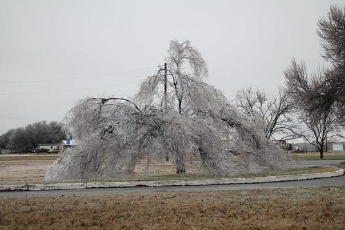 weeping frozen tears rain freezing tree broken