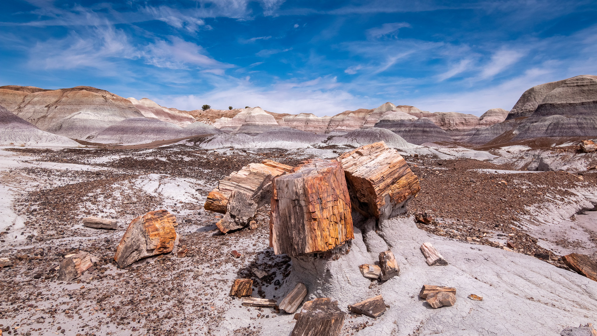 Petrified Forest - Arizona - [USA]
