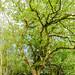 Bannams Wood 13th May 2018