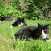 Senior Tuxies on the lawn in May