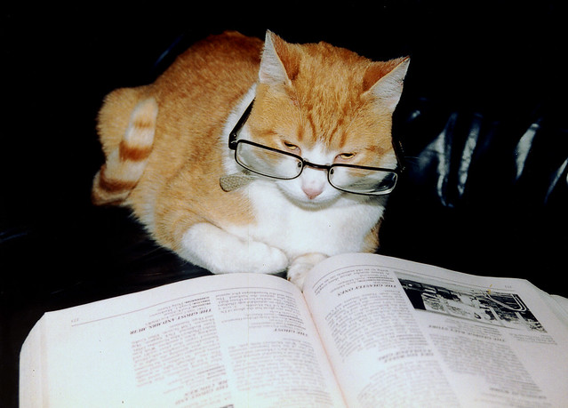 think your cat is smarter than mine?