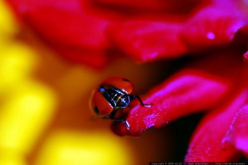 ladybug butt    MG 2871