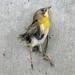 Dead Bird by superpond