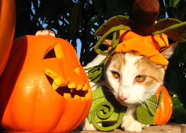 A Caturday Collection, Cats in Costumes Ready for Halloween