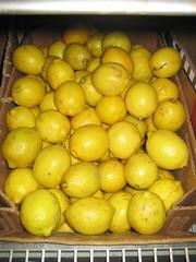 clementine(0.0), orange(0.0), plant(0.0), citrus(1.0), lemon(1.0), yellow(1.0), key lime(1.0), meyer lemon(1.0), kumquat(1.0), yuzu(1.0), produce(1.0), fruit(1.0), food(1.0), tangelo(1.0), sweet lemon(1.0), bitter orange(1.0), citron(1.0), lime(1.0),