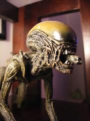 alien example