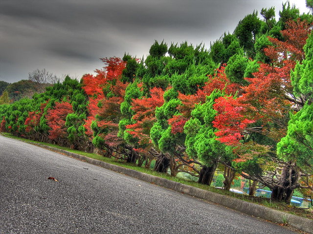 Photo:Fall trees (HDR) By EugeniusD80